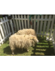 Location de mouton