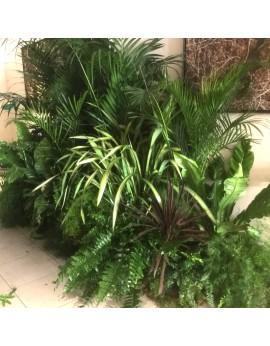 Location de plantes naturelles