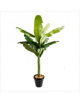 Location plantes tropicales