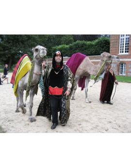 Dromadaire et son Chamelier costumé