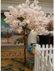 Location arbres en fleurs Asiatique