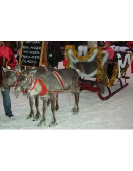 Les rennes du Père-Noël