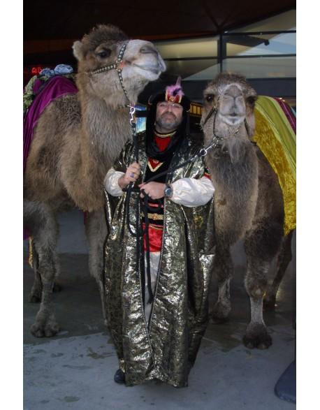 Les rois mages et leur(s) dromadaire(s)
