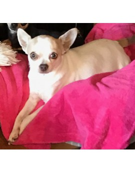Chiens - petite taille -